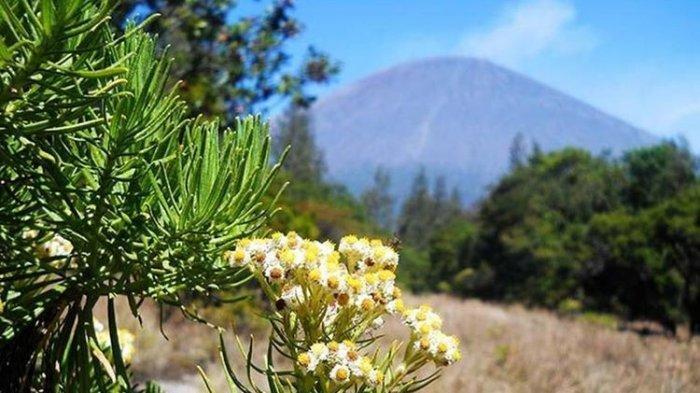 Terkenal dengan Hamparan Edelweiss, 7 Gunung di Indonesia Ini Tampak Memesona