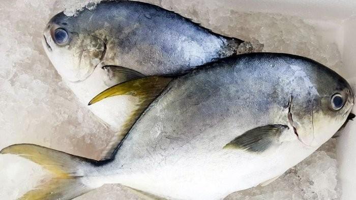 Cara Mudah Menghilangkan Bau Amis Pada Ikan Sebelum Dimasak