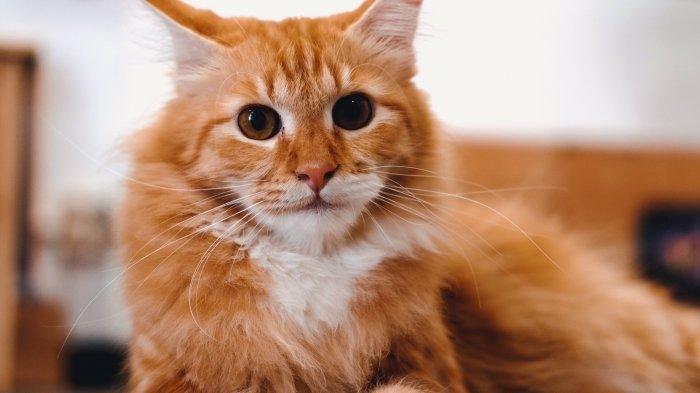 Sedang Berada di Surakarta? Kunjungi Paw Paw Cafe, Nongkrong Asyik Sambil Bermain Bersama Kucing