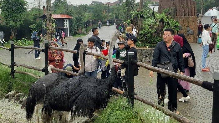 Mulai 12 Februari 2021, Lembang Park & Zoo Tawarkan Promo Beli 2 Gratis 1