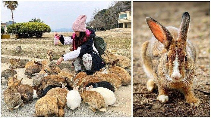 Pulau Okunoshima di Jepang, Bekas Pangkalan Militer yang Kini Dihuni Ratusan Kelinci