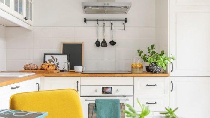 8 jenis Tanaman Hias yang Cocok Dipajang di Ruang Dapur