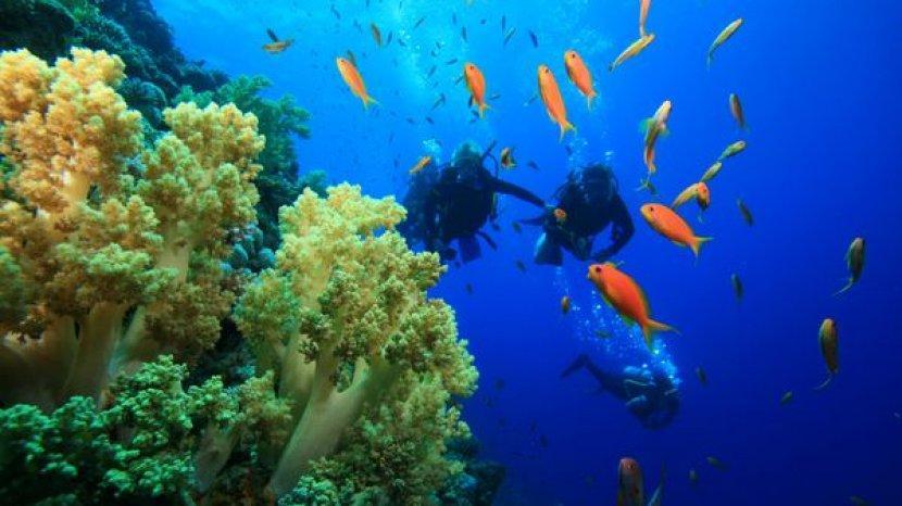 8 Spot Menyelam Terbaik di Taman Laut Bunaken, Bisa Melihat Ikan Barakuda Raksasa dari Dekat