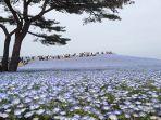 hitachi-seaside-park.jpg