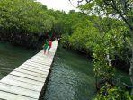 hutan-mangrove-lirang2.jpg