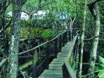 hutan-mangrove.jpg