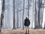 hutan-pinus-samboja.jpg