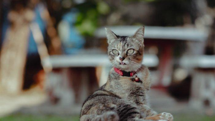 Kucing Dianggap Bisa Memprediksi Gempa Bumi, Berikut Perilakunya