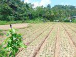 Dampak Ekonomi Covid-19, Pastor Yo Intensifkan Stay At Kobong di Keroit, Motoling dan Raanan Lama