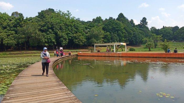 Mengintip Keindahan Danau Dora di LIPI Cibinong, Tempat Konservasi Alam Sekaligus Rekreasi