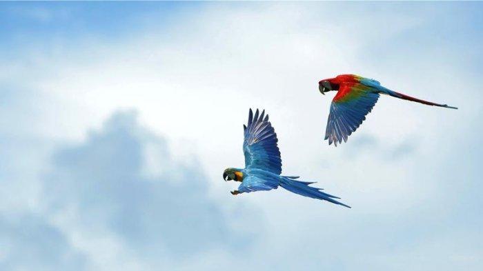 Bali Bird Park1
