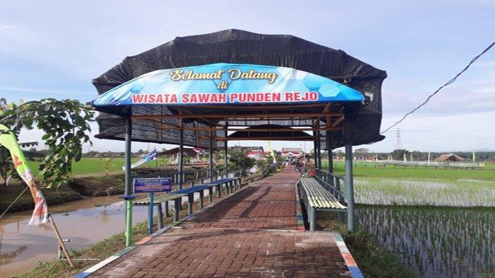 Wisata-Sawah-Punden-Rejo.jpg
