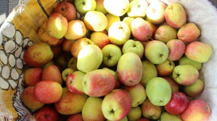 apel-malangg.jpg