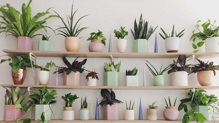 kiat-merawat-tanaman-dalam-rumah.jpg