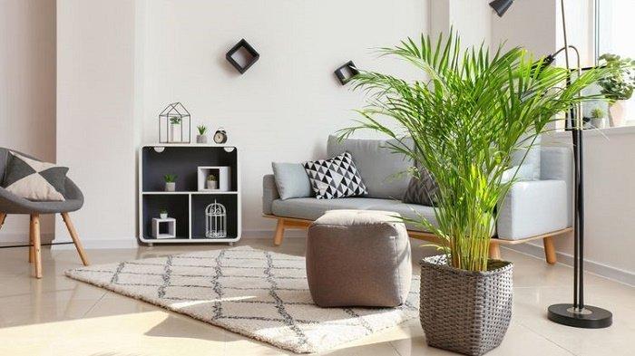 tanaman-hias-pembersih-udara-dalam-rumah.jpg