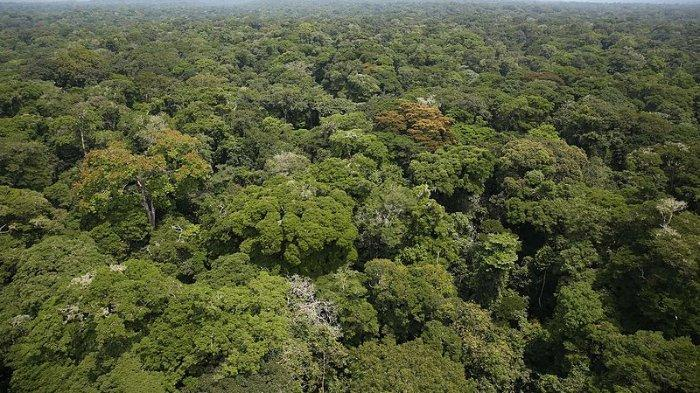 the-congo-basin-forest-123.jpg