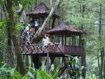 Hutan Pinus Songgon Banyuwangi