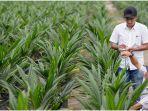 Lowongan Kerja BUMN PT Perkebunan Nusantara VI untuk Lulusan Minimal D-3