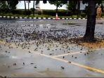 Viral Video Ratusan Burung Pipit Mati di Kota Cirebon, Diduga Karena Cuaca Ekstrem