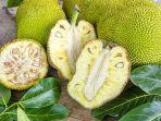 Buah Nangka (Jackfruit)