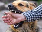 Bocah di Medan Tewas setelah Digigit Anjing, Ibu Sebut Sang Anak Bertingkah Layaknya Hewan