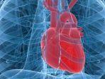 jantungkompascomintisari-onlinecom.jpg