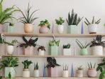 5 Kiat Memelihara Tanaman dalam Rumah, Dijamin Tumbuh Sehat dan Cantik