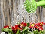 Jangan Sembarangan, Ternyata Ini 3 Air Terbaik untuk Menyiram Tanaman Agar Cepat Tumbuh