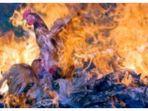 pembakaran-unggas.jpg