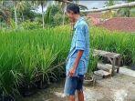 Lahan Kebanjiran, Petani Asal Pangandaran ini Sulap Atap Rumahnya Jadi Sawah