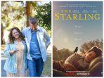 FILM - The Starling (2021)