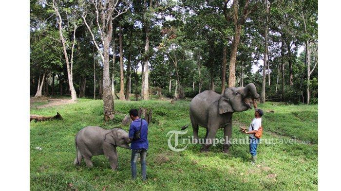 Berwisata Melihat Alam dan Anak Gajah di TWA Buluh Cina Kampar, Hanya 40 Menit dari Pekanbaru