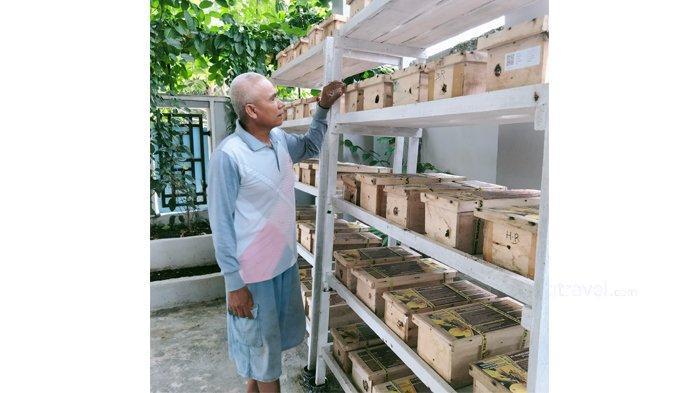 Cerita Warga Riau Budidaya Madu Lebah Klanceng, Simpel dan Hasilnya Menggiurkan