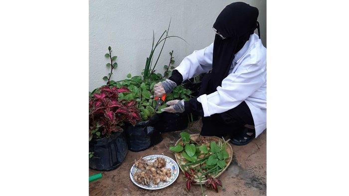 Ahli Herbal Asal Riau Paparkan Ramuan Herbal Antivirus, Ini Resepnya