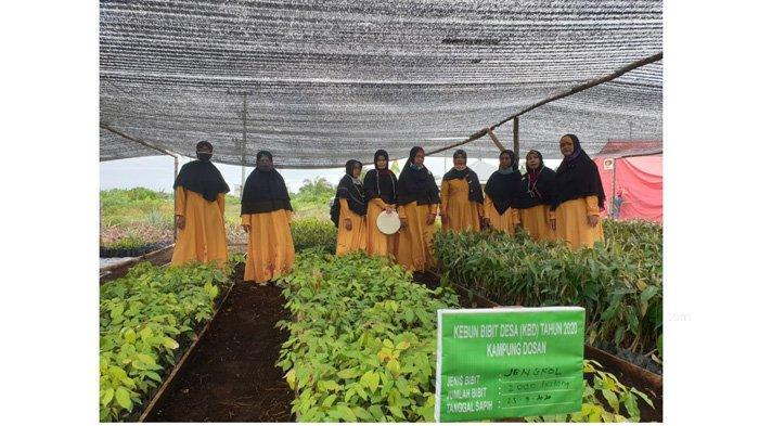 Kelompok Kebun Bibit Desa dari BPDASHL Indragiri Rokan Semuanya Perempuan, Ini Kisahnya