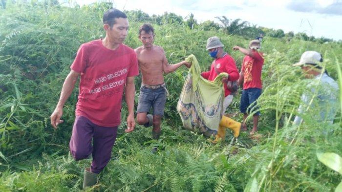 Warga Dumai Tewas Dimangsa Harimau di Kebun Sawit, Ini Kata BBKSDA Riau