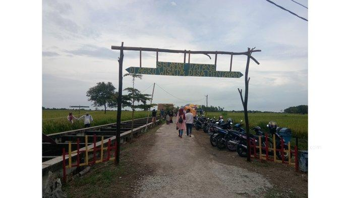 Indahnya Persawahan di Agrowisata Desa Mentayan, Destinasi Alternatif Wisata Baru Warga Bengkalis