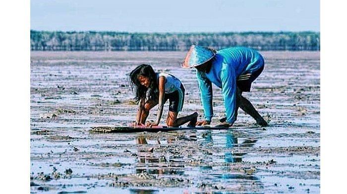 Mut Tiangan, Budaya Menongkah Kerang Suku Duanu yang Dilakukan Saat Air Laut Surut