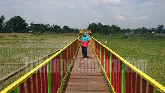 Indahnya Lanskap Sawah Koto di Kabupaten Rohul, Objek Wisata Sawah Kedua di Indonesia