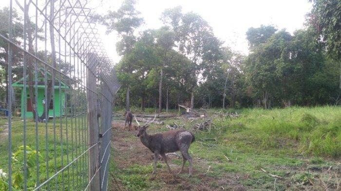 Bersantai di Taman Tengku Agung Siak, Pengunjung Juga Bisa Melihat Rusa dari Dekat