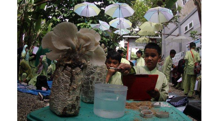 Berawal dari Hobi, Ini Cerita Bayu Fernando Dirikan Destinasi Wisata Rumah Edukasi Jamur Nando