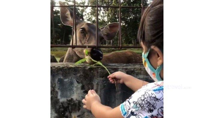 Berwisata ke Taman Rusa, Mini Zoo di Kabupaten Siak, Pengunjung Bisa Memberi Makan Rusa dari Dekat