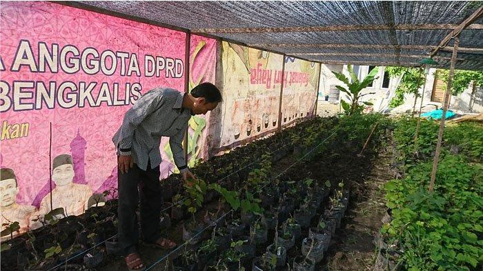 Miliki Puluhan Jenis Anggur, Agrowisata Hani Grape di Bengkalis Ramai Dikunjungi Saat Musim Berbuah
