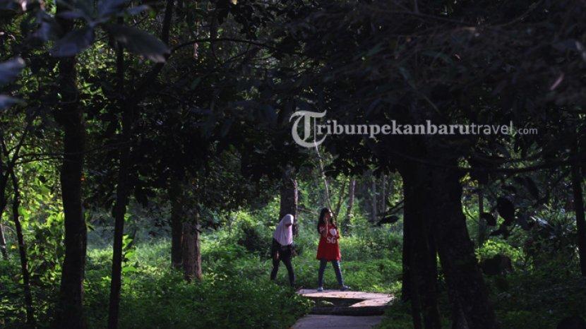 Jaga Hutan Riau Tetap Lestari, Program Adopsi Pohon Disambut Positif