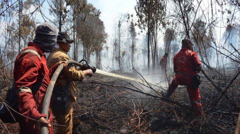 Kebakaran di Giam Siak Kecil Sudah 11 Hari, Kepala BBKSDA Riau: Kami Akan Sita Bibit Sawit di Sana