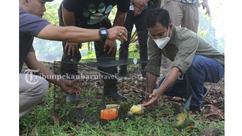 Ditreskrimsus Polda Riau Bersama BBKSDA Riau Lepasliarkan Burung Dilindungi di TWA Buluh Cina