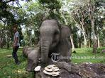 Anak-gajah-bernama-Damar-di-TWA-Buluh-Cina-Kabupaten-Kampar-Provinsi-Riau-1.jpg<pf>Pengunjung-di-TWA-Buluh-Cina-juga-dapat-melihat-Gajah-Sumatera.jpg