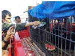 BBKSDA-Riau-evakuasi-bewruang-di-inhil.jpg
