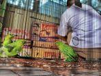 BBKSDA-Riau-mengamankan-sejumlah-satwa-burung-1.jpg