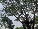 Bermain-flying-fox-di-Taman-Bukit-Gelanggang.jpg